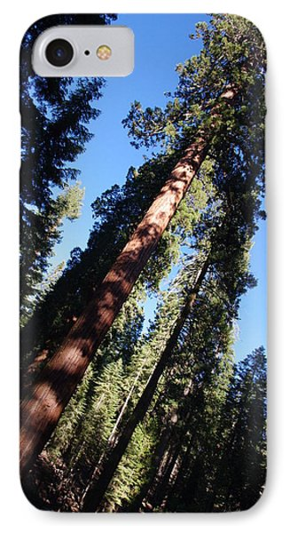 Giant Redwood Trees IPhone Case by Jeff Lowe