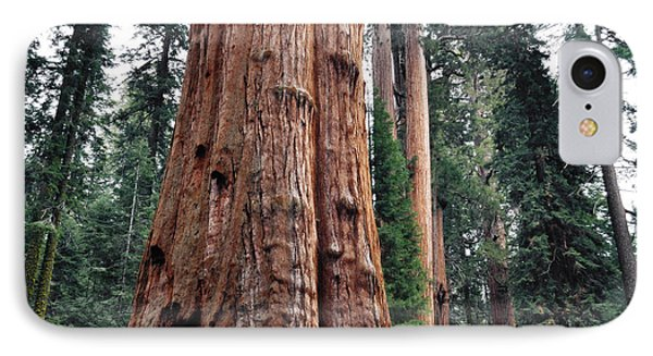 IPhone Case featuring the photograph Giant Sequoia II by Kyle Hanson