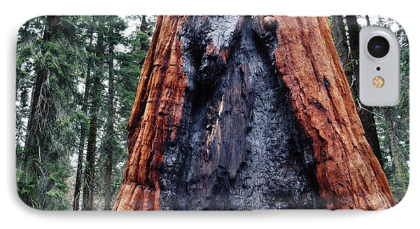 IPhone Case featuring the photograph Giant Sequoia by Kyle Hanson