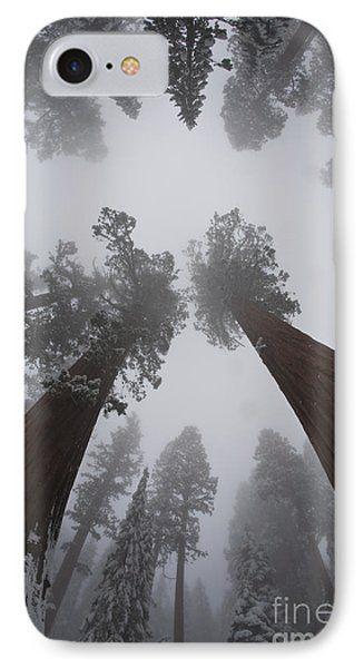 Giant Sequoias Phone Case by Gregory G. Dimijian, M.D.