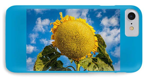 Giant Sunflower Against A Blue Sky With Clouds. IPhone Case by John Brink