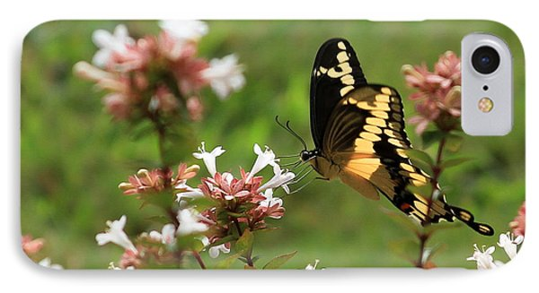 Giant Swallowtail Butterfly 2 IPhone Case by Reid Callaway