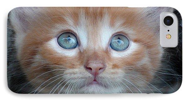 Ginger Kitten With Blue Eyes IPhone Case by Sergey Lukashin