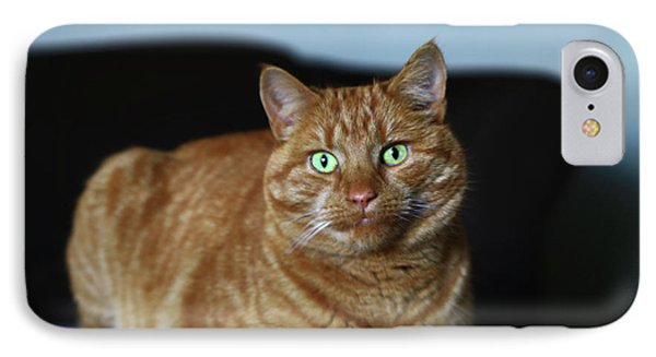 IPhone Case featuring the photograph Ginger Marmalade Cat by Nareeta Martin