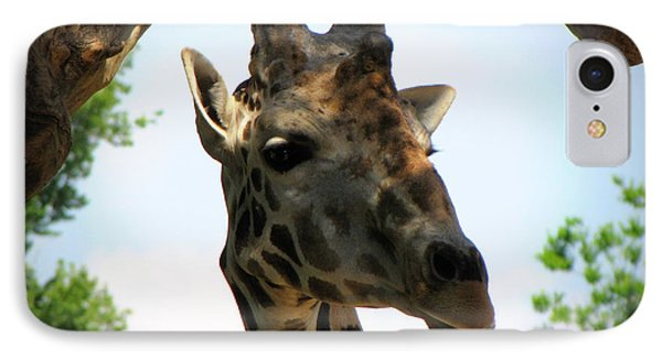 IPhone Case featuring the photograph Giraffe by Beth Vincent