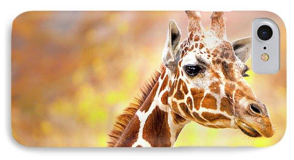 Giraffe IPhone Case by David Millenheft