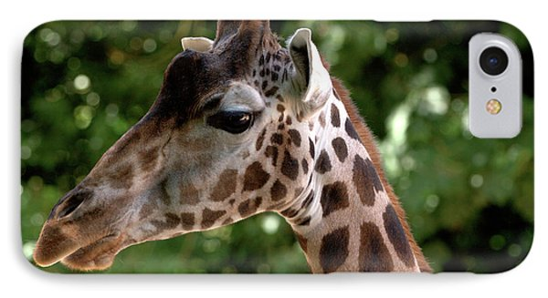 Giraffe Portrait IPhone Case