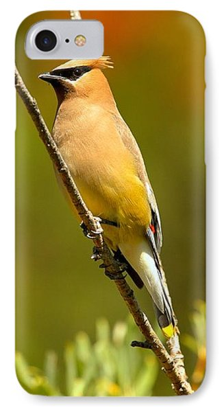 Glacier Cedar Waxwing IPhone 7 Case by Adam Jewell