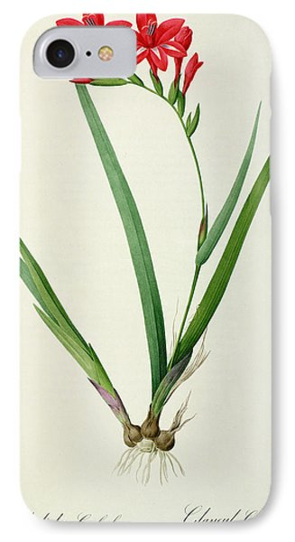 Gladiolus Cardinalis IPhone Case by Pierre Joseph Redoute