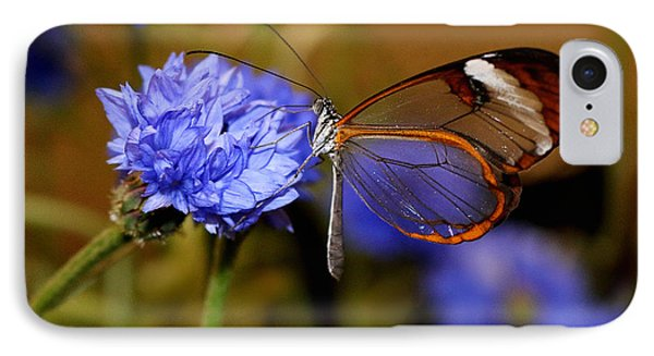 Glasswing Butterfly IPhone Case by Living Color Photography Lorraine Lynch
