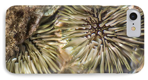 IPhone Case featuring the photograph Glistening by Colleen Coccia