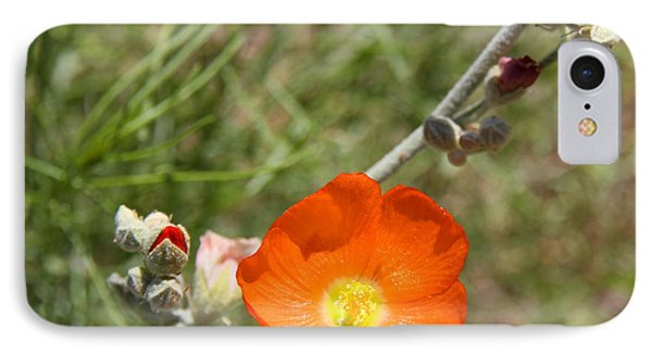 Globe Mallow Bloom IPhone Case