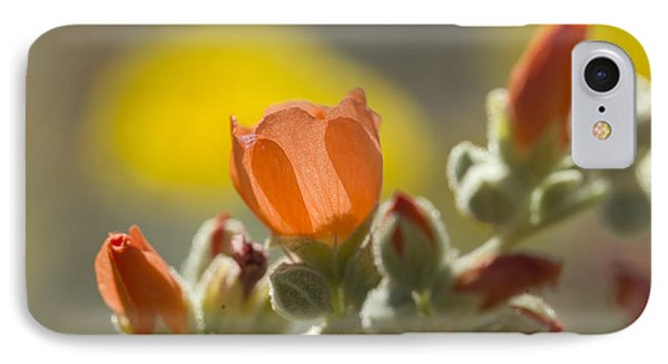 Globe Mallow Glow IPhone Case by Sue Cullumber