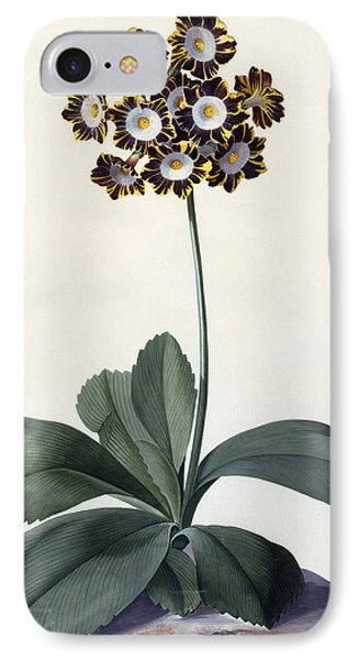 Glory Of Chilton IPhone Case by Georg Dionysius Ehret