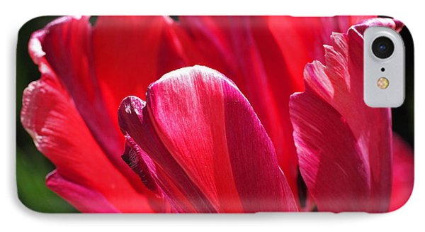 Glowing Red Tulip IPhone Case by Rona Black
