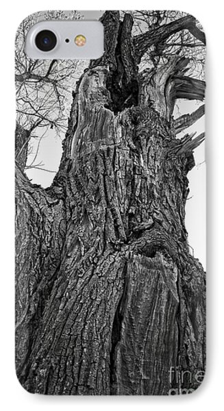 Gnarly Old Tree IPhone Case by Edward Fielding