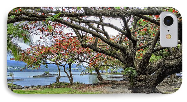 Gnarly Trees Of South Hilo Bay - Hawaii IPhone Case by Daniel Hagerman