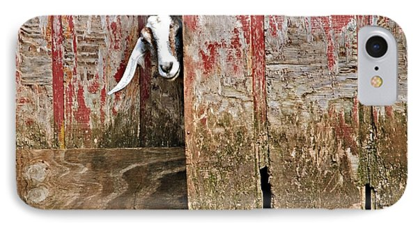 Goat And Old Barn Door IPhone Case by Susan Leggett