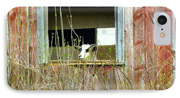 IPhone Case featuring the photograph Goat In The Window by Donald C Morgan
