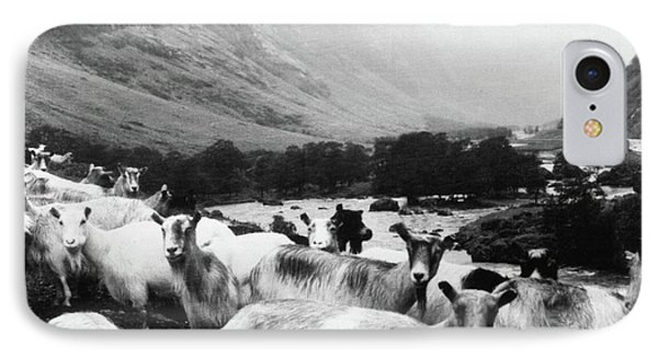 Goats In Norway- By Linda Woods IPhone Case by Linda Woods