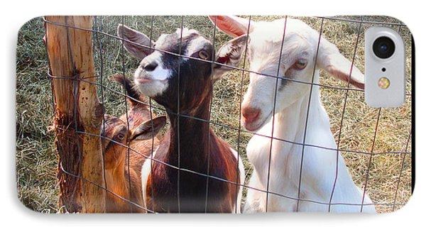 Goats Poster IPhone Case by Felipe Adan Lerma