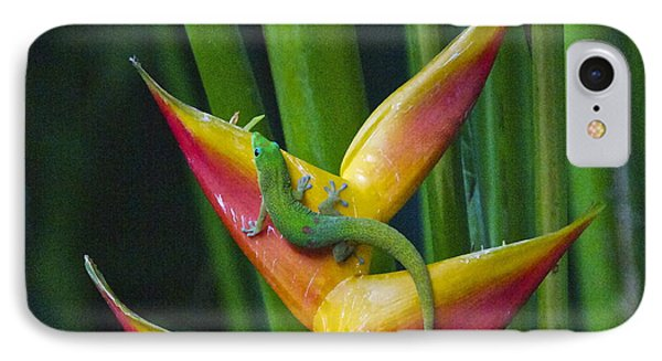 Gold Dust Day Gecko IPhone Case by Sean Griffin
