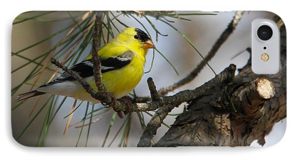 Gold Finch IPhone Case by Roger Becker