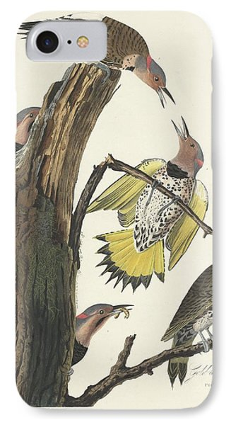 Gold-winged Woodpecker IPhone 7 Case