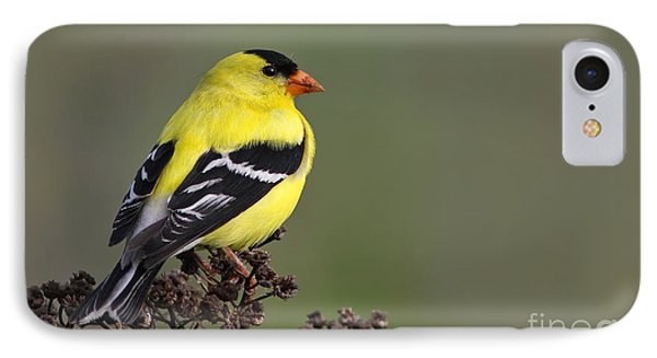 Golden Bird Phone Case by Mircea Costina Photography