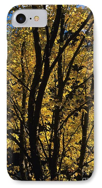 Golden Colors Of Autumn In New England  Phone Case by Erin Paul Donovan