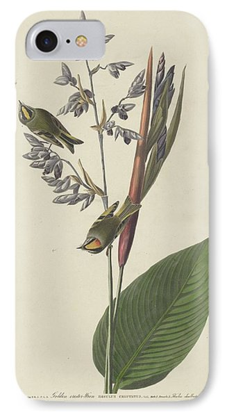 Golden-crested Wren IPhone Case by Dreyer Wildlife Print Collections
