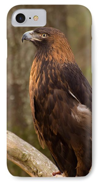 IPhone Case featuring the photograph Golden Eagle Resting On A Branch by Chris Flees