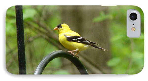 Golden Finch IPhone Case