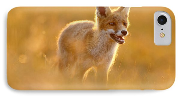 Golden Fox - Backlit Juvenile Red Fox On  A Summer Day IPhone Case