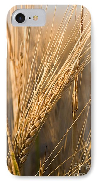 Golden Grain Phone Case by Cindy Singleton