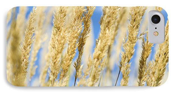IPhone Case featuring the photograph Golden Grains by Christi Kraft