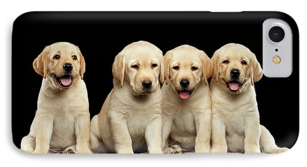 Golden Labrador Retriever Puppies Isolated On Black Background IPhone Case