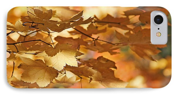 Golden Light Autumn Maple Leaves Phone Case by Jennie Marie Schell