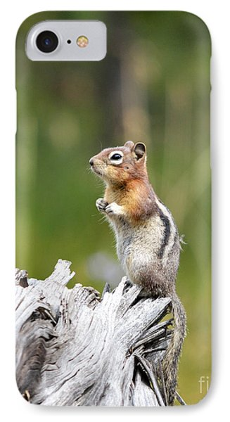Golden Mantled Ground Squirrel IPhone Case