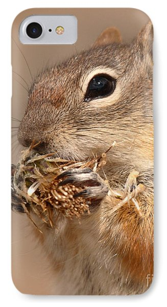 Golden-mantled Ground Squirrel Nibbling On A Bite IPhone Case by Max Allen