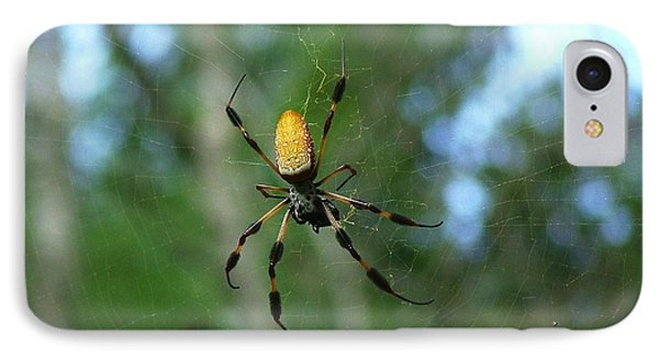 Golden Orb Weaver 1 IPhone Case