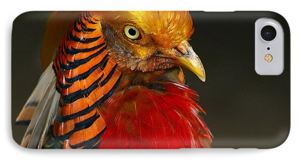 IPhone Case featuring the photograph Golden Ornamental Pheasant by Debbie Stahre