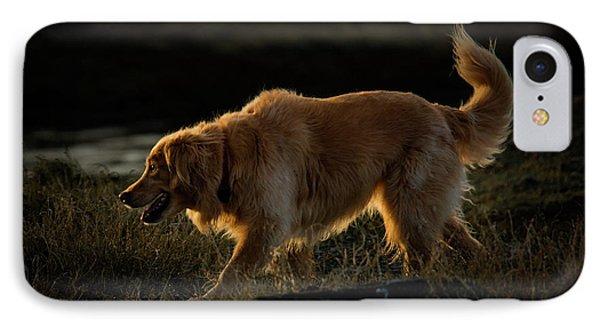 IPhone Case featuring the photograph Golden by Randy Hall