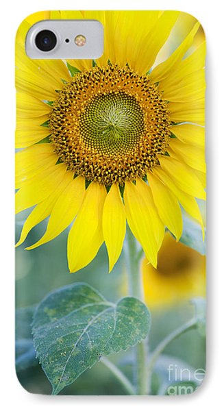 Golden Sunflower IPhone 7 Case