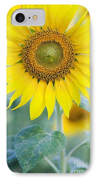 Sunflower iPhone 7 Case - Golden Sunflower by Tim Gainey