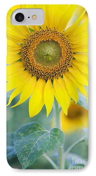 Golden Sunflower IPhone 7 Case by Tim Gainey