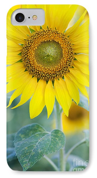 Golden Sunflower IPhone Case by Tim Gainey