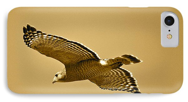 Golden Sunlight On Hawk Phone Case by Carol Groenen