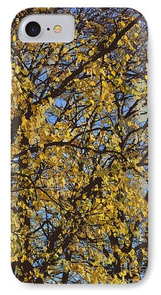 Golden Tree 3 Phone Case by Carol Lynch