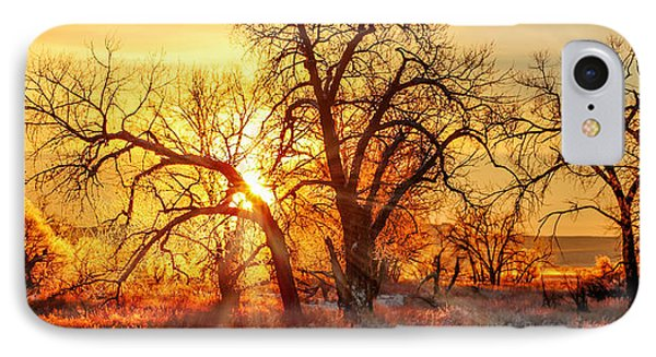 Golden Trees IPhone Case by Todd Klassy